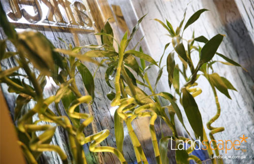 natural-bamboos-to-give-energy-to-the-interiors
