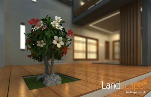 House-Backyard-Design