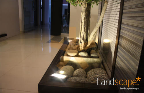Close-View-of-Pebbles-and-Spot-Light-on-Bonsai
