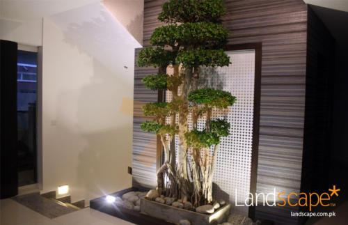 Large-Bonsai-Tree-Has-Enhanced-the-Courtyard-View